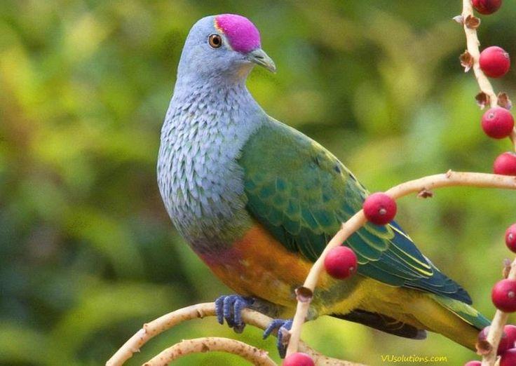 بالصور صور طيور , مجموعه صور طيور زينه رائعه 2404 2