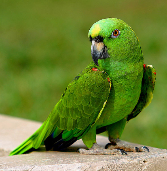 بالصور صور طيور , مجموعه صور طيور زينه رائعه 2404 3