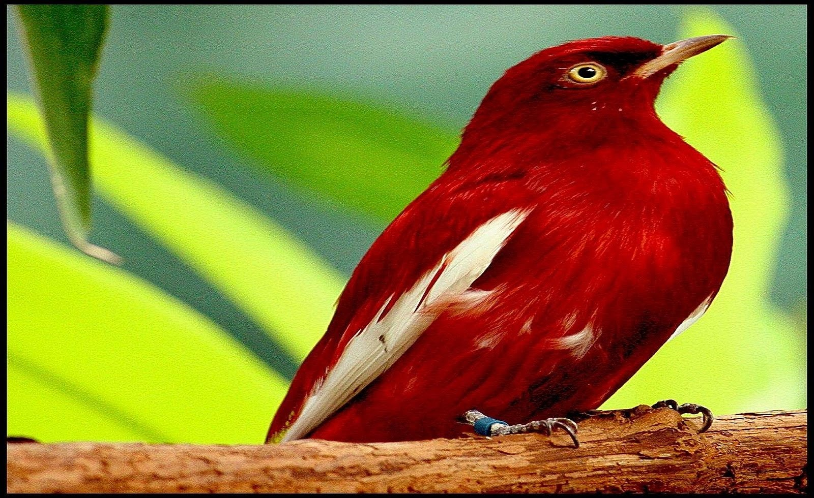 بالصور صور طيور , مجموعه صور طيور زينه رائعه 2404 4