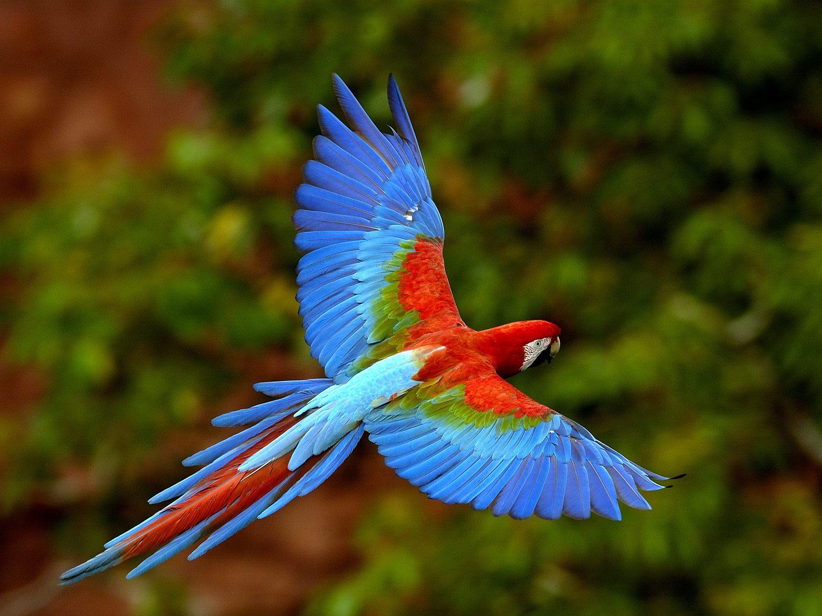 بالصور صور طيور , مجموعه صور طيور زينه رائعه 2404 5