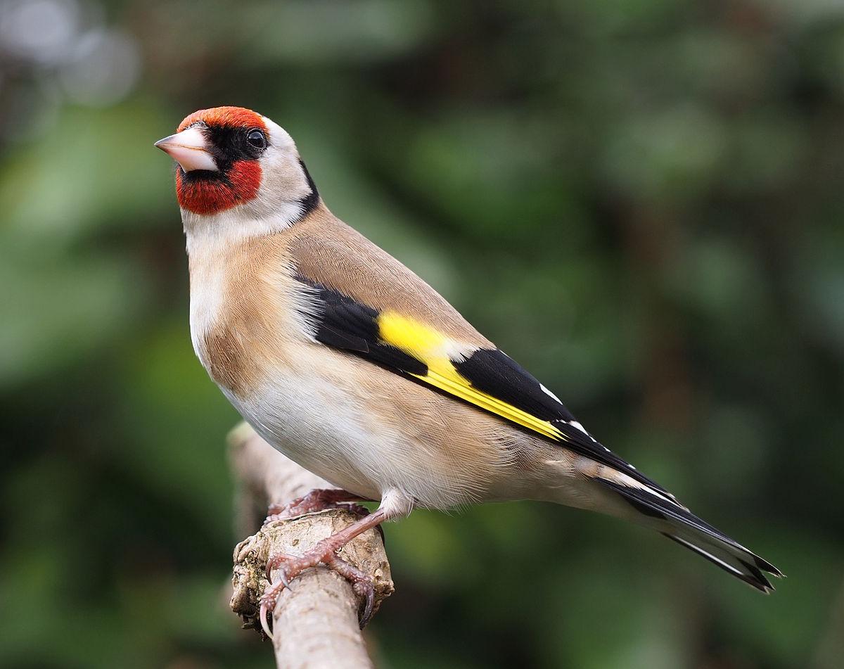 بالصور صور طيور , مجموعه صور طيور زينه رائعه 2404 7