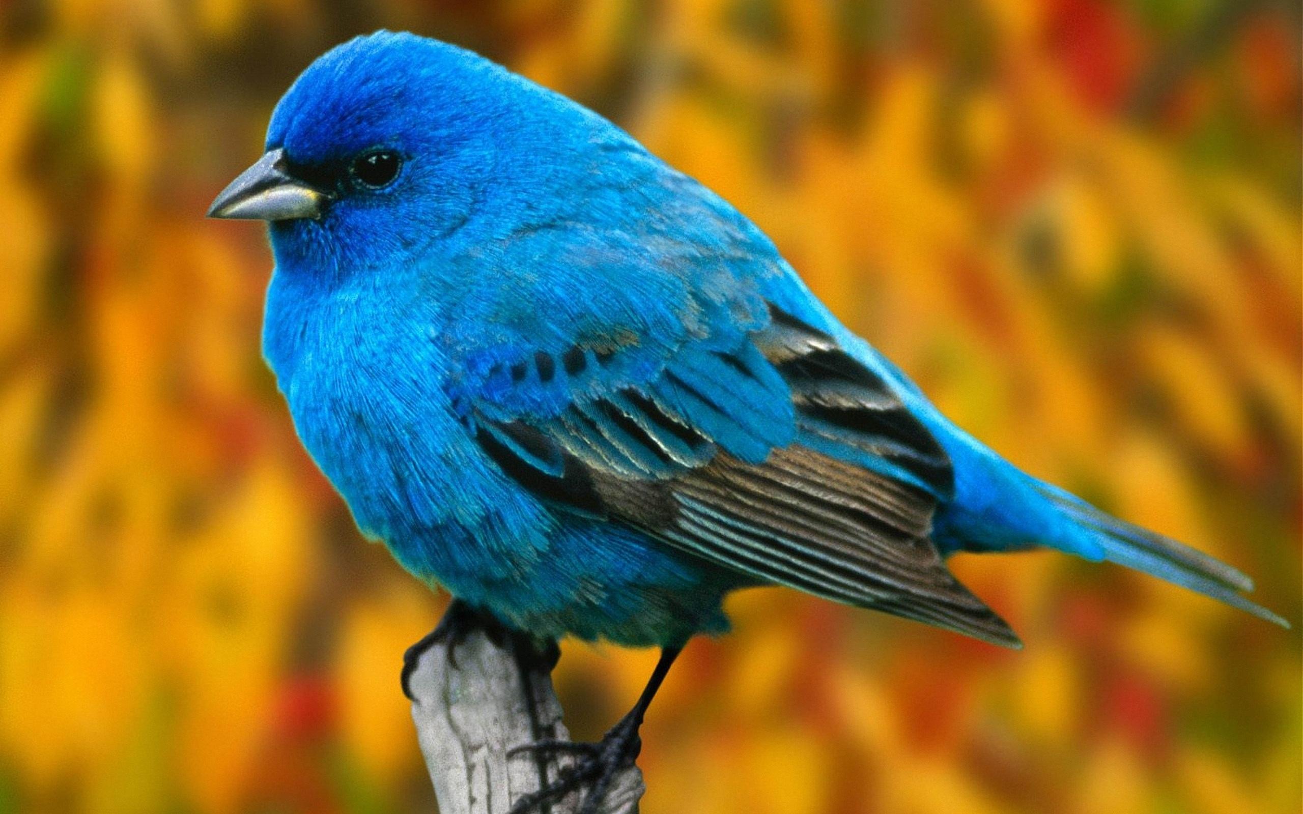 بالصور صور طيور , مجموعه صور طيور زينه رائعه 2404 8