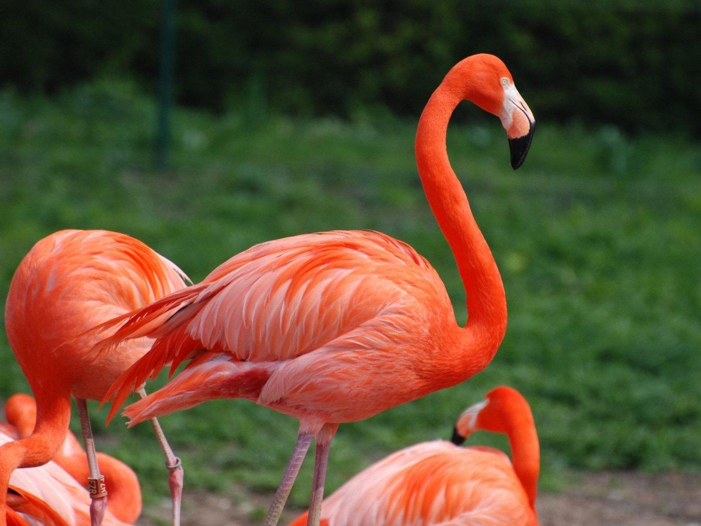 بالصور صور طيور , مجموعه صور طيور زينه رائعه 2404 9