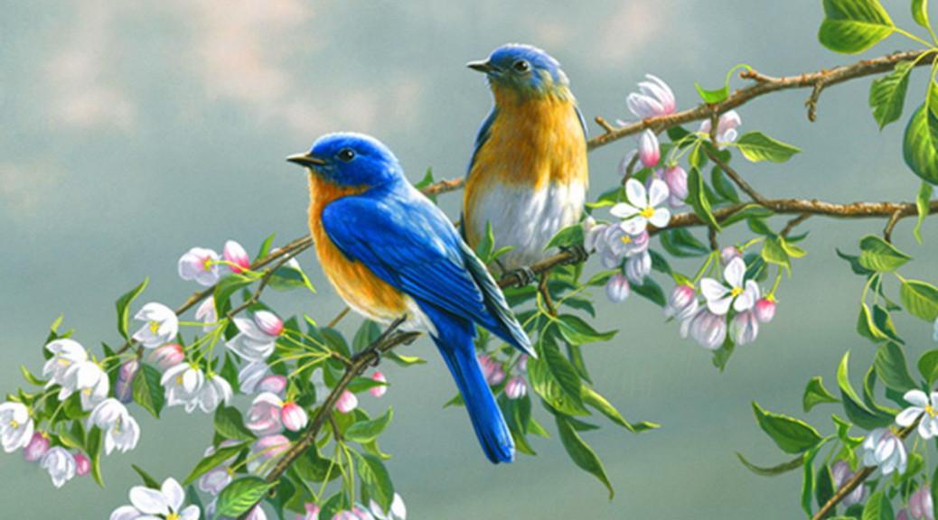 صور صور طيور , مجموعه صور طيور زينه رائعه
