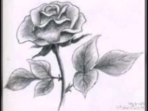 صوره رسومات جميلة , صور لاجمل و اروع الرسومات