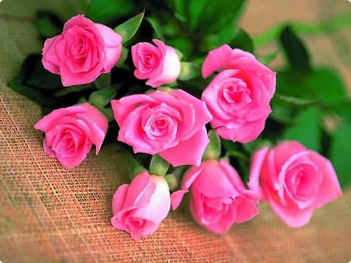 بالصور صور ورد رومانسي , صور للورود والحب الرومانسي 2455 3
