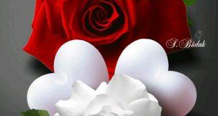 صوره صور ورد رومانسي , صور للورود والحب الرومانسي