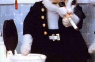 صوره صور قطط مضحكة , مجموعه من الصور المضحكه لحركات القطط