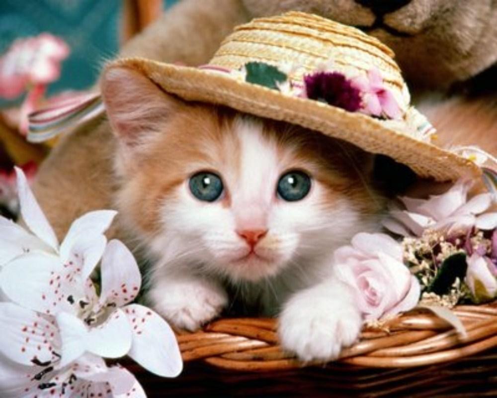 بالصور صور قطط صغيرة , اروع صور جميله لقطط صغار 2521 1