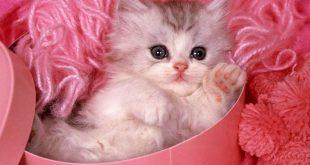 صور قطط صغيرة , اروع صور جميله لقطط صغار