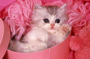 صور صور قطط صغيرة , اروع صور جميله لقطط صغار