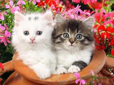 بالصور صور قطط صغيرة , اروع صور جميله لقطط صغار 2521 2