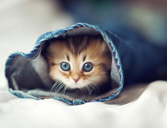 بالصور صور قطط صغيرة , اروع صور جميله لقطط صغار 2521 3