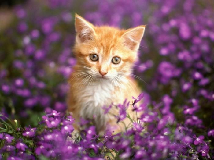 بالصور صور قطط صغيرة , اروع صور جميله لقطط صغار 2521 4