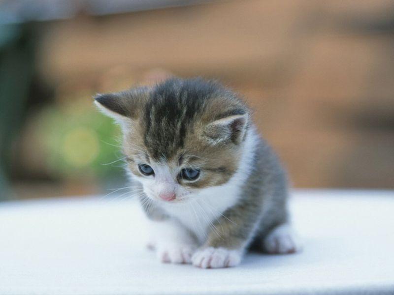 بالصور صور قطط صغيرة , اروع صور جميله لقطط صغار 2521 5
