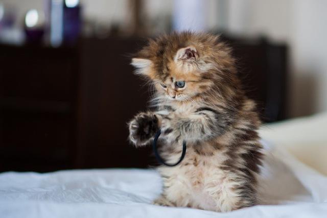بالصور صور قطط صغيرة , اروع صور جميله لقطط صغار 2521 6