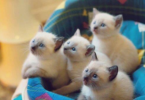بالصور صور قطط صغيرة , اروع صور جميله لقطط صغار 2521 7