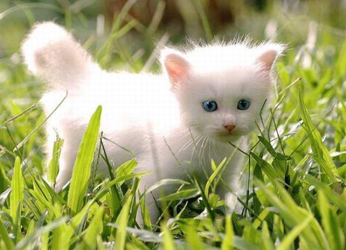 بالصور صور قطط صغيرة , اروع صور جميله لقطط صغار 2521 8
