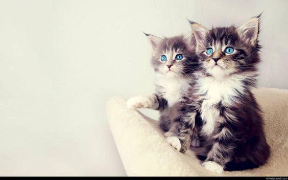 بالصور صور قطط صغيرة , اروع صور جميله لقطط صغار 2521 9