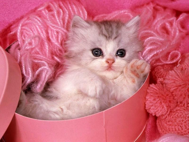 بالصور صور قطط صغيرة , اروع صور جميله لقطط صغار 2521