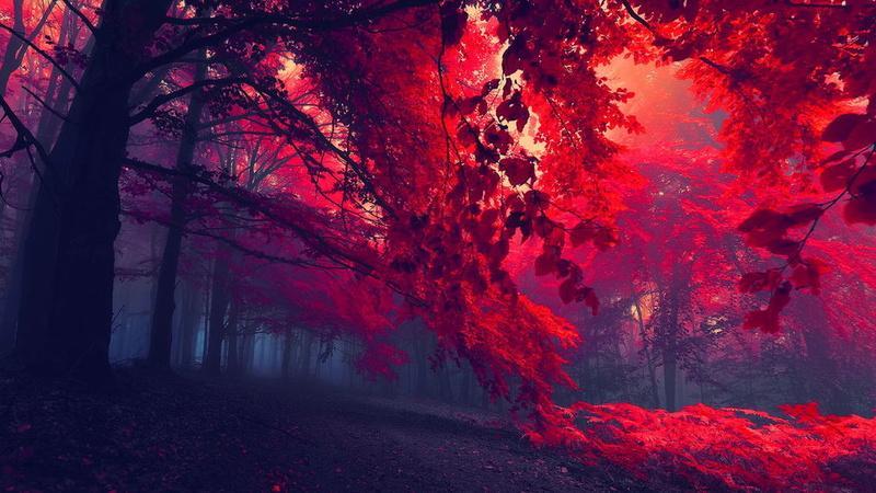 بالصور صور من الطبيعة , صور معبرة الجمال الساحر للطبيعه 2626 7