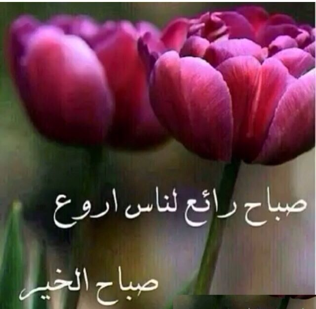 صورة صباح جميل , اجمل صباح علي الاحباب