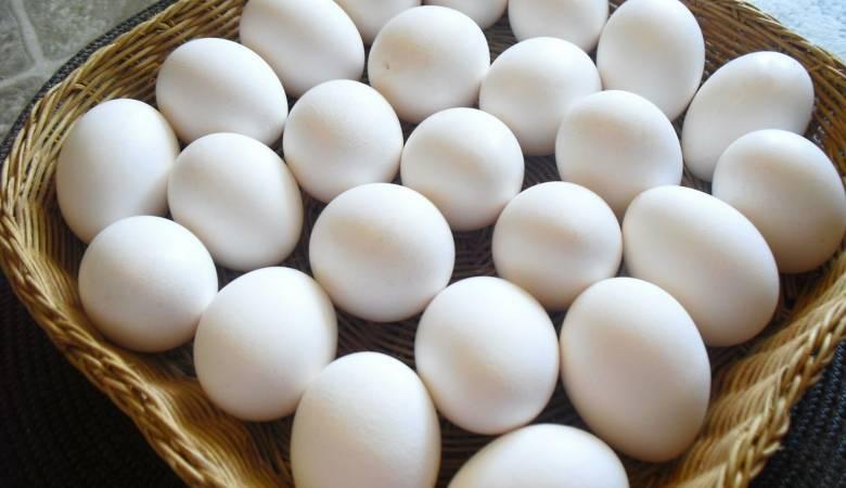صور تفسير رؤية البيض في المنام للمتزوجة , البيض في المنام كما تم تفسيرة للمتزوجه