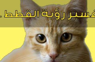 بالصور رؤية القطط بالمنام , مشاهدة القطة فى الحلم 2924 1 310x205