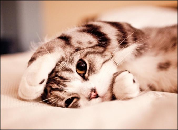 صور رؤية القطط بالمنام , مشاهدة القطة فى الحلم