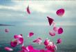بالصور صور للتصميم , صور جميلة للتصميم 3280 1 110x75