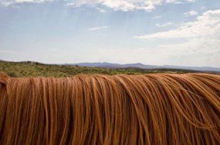 صورة تفسير حلم الشعر الطويل , رؤيه الشعر الطويل فى الحلم