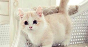 صور قطط كيوت , اجمل القطط الرائعه جدا