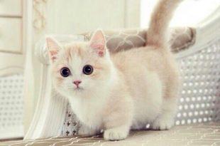 صوره صور قطط كيوت , اجمل القطط الرائعه جدا