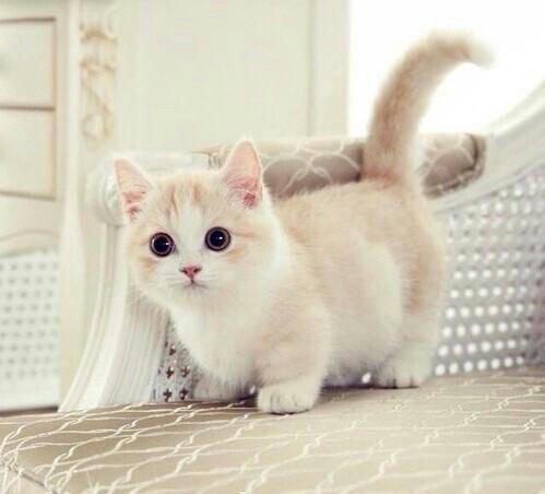صور قطط جميلة 3413