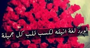 خواطر عن الورد , عبارات رائعه عن الورد