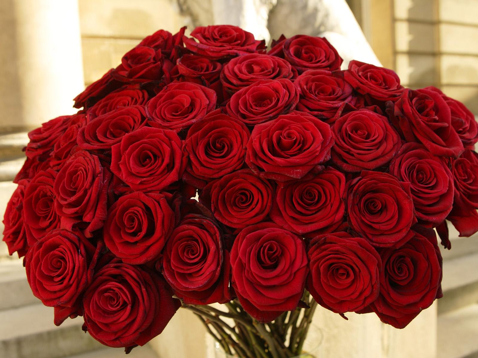 صوره بوكيه ورد كبير , اجمل الورد بالصور