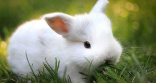 صور حيوانات اليفه , صور جميله جدا للحيوانات المنزليه