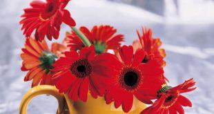 بالصور زهور جميلة , اجمل ورده بالصور 3753 9 310x165