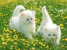 صور قطط جميلة , اجمل صور لاجمل قطه