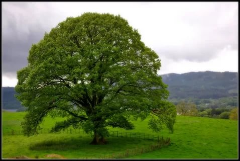 صوره صور اشجار , احلى صوة طبيبعية للاشجار الكبيرة