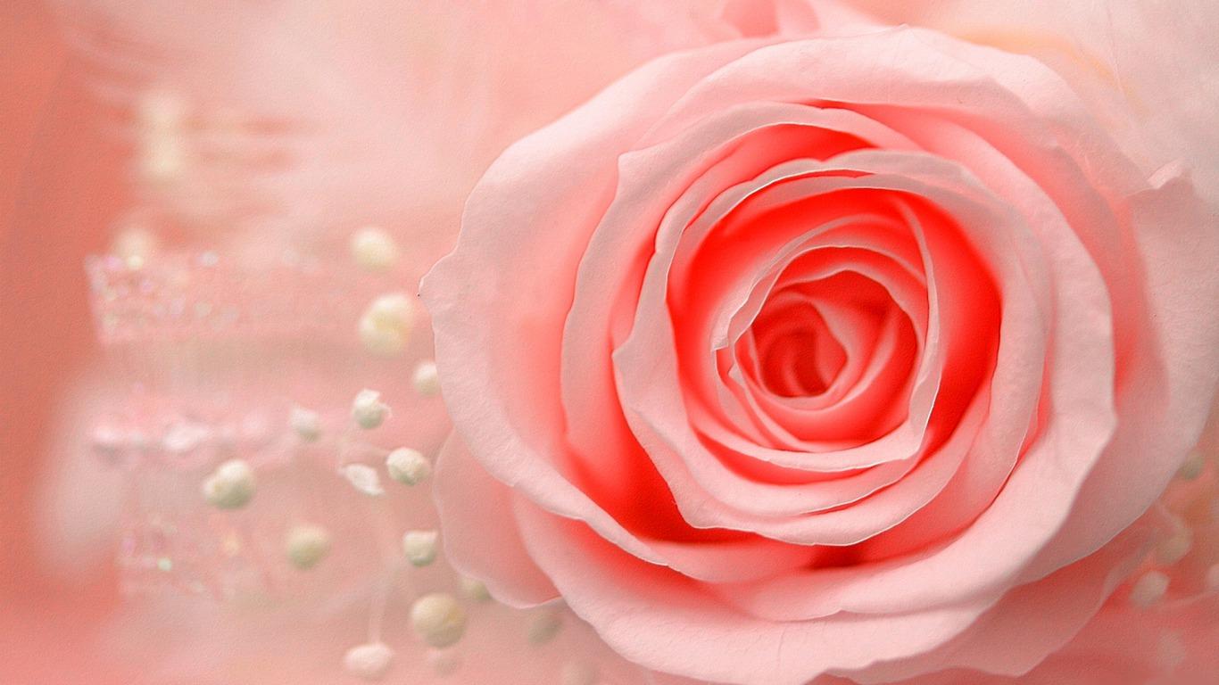 صور خلفيات ورود , اجمل صور خلفيات الورود