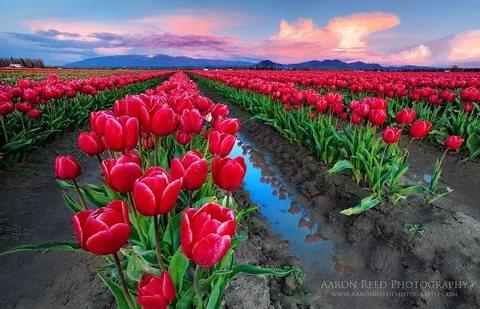 بالصور خلفيات ورود , اجمل صور خلفيات الورود 1072 3