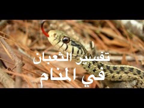 صور تفسير الثعبان في المنام , وجود الثعابين فى الحلم