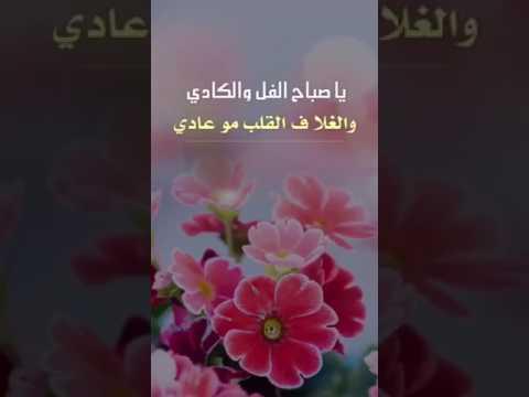 بالصور صباح الفل , صور مميزة لكلمة صباح الفل تبادلها مع اصحابك 1188 9