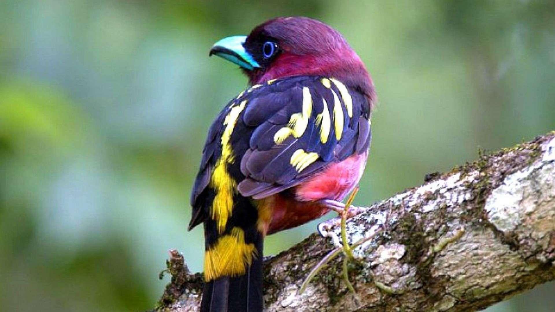 بالصور اجمل كناري في العالم , عصافير الكناريا 1220 2
