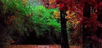 بالصور صور جمال الطبيعة , لوحات عن الطبيعة 1367 10