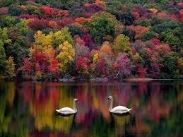 بالصور صور جمال الطبيعة , لوحات عن الطبيعة 1367 5