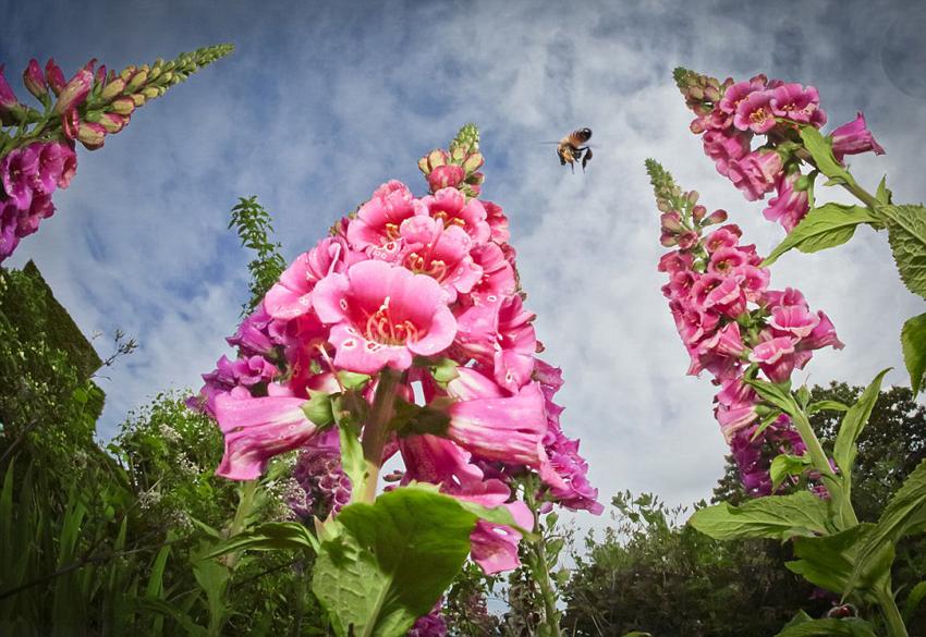 بالصور صور جمال الطبيعة , لوحات عن الطبيعة 1367 6