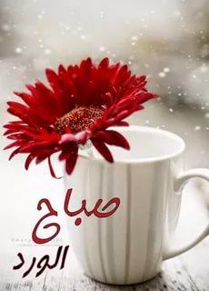 بالصور احلى صباح , اجمل عبارات الصباح تهديها لاصحابك 1446 1