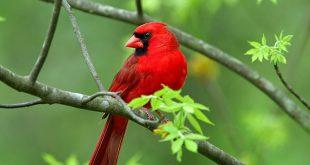 صور صور عصافير , صور مختلفه لمجموعه من العصافير النادرة